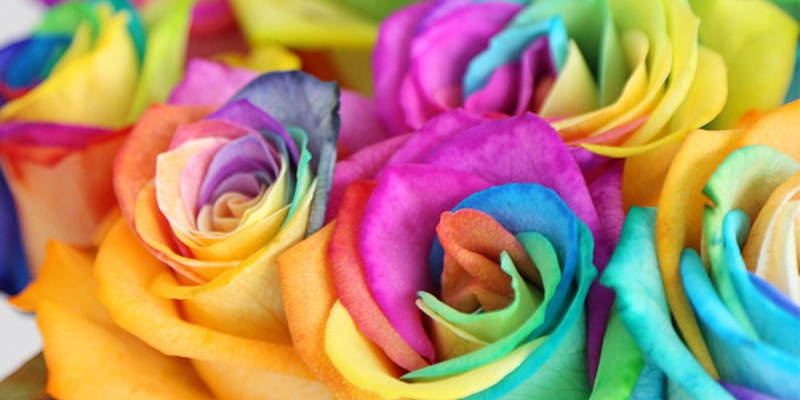 Celebrate the NHS with Rainbow Roses