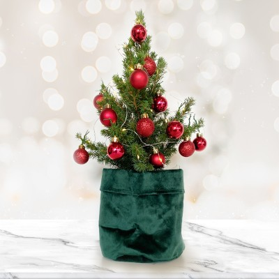 A miniature evegreen Christmas tree decorated with red baubles.