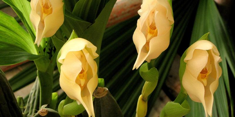 12 Weird & Wonderful Flowers From Around the World