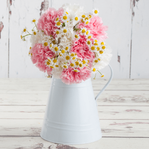 Candyfloss Carnations
